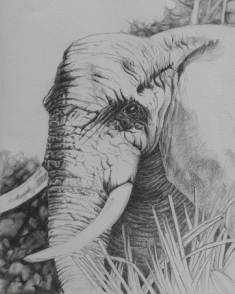 Tami's Art - Big Five
